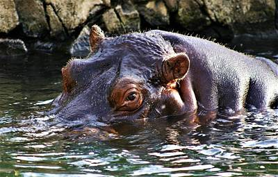 Hippo 3779_2 Poster