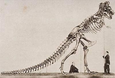 Historical Illustration Of Dinosaur Poster