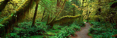 Hoh Rainforest, Olympic National Park Poster by Panoramic Images