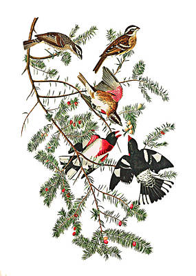 Poster featuring the photograph Holiday Birds by Munir Alawi