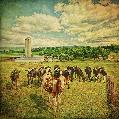 Poster featuring the photograph Holy Cows by Lewis Mann