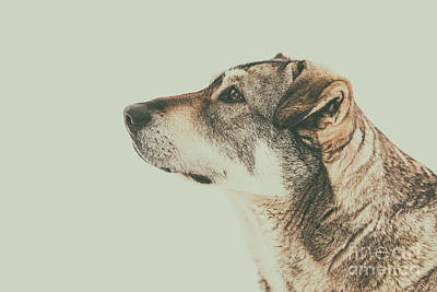 Homeless Dog Looking Up Portrait Poster by Radu Bercan