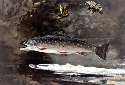 Homer: Trout, 1889 Poster by Granger