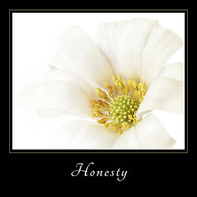 Poster featuring the photograph Honesty 2 by Mary Jo Allen