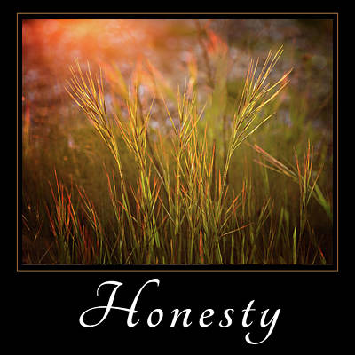 Poster featuring the photograph Honesty by Mary Jo Allen