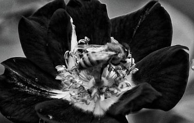 Honey Bee In Black Poster