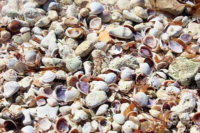 Honeymoon Island Shells Poster
