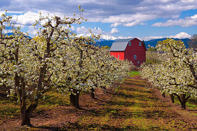 Hood River Spring Morning Poster by Patrick Campbell