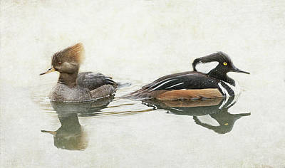 Poster featuring the photograph Hooded Mergansers by Angie Vogel