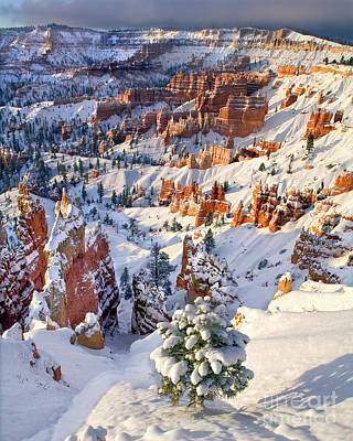 Poster featuring the photograph Hoodoos And Fir Tree In Winter Bryce Canyon Np Utah by Dave Welling