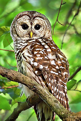 Poster featuring the photograph Hoot Owl by Christina Rollo