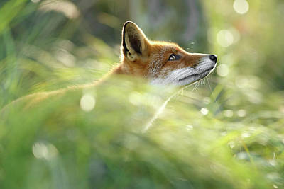 Hope - All Good Things Come From Above Poster by Roeselien Raimond