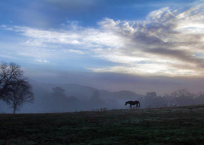 Horse And Fog Poster by Stephanie Laird