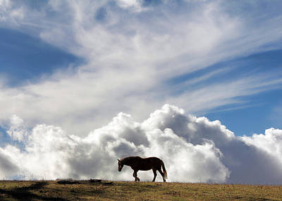 Horse And Sky Poster