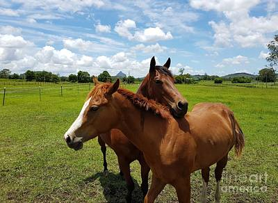Horse Cuddles Poster