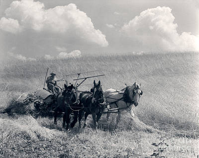 Horse-drawn Wheat Harvesting, C.1920-30s Poster by H. Armstrong Roberts/ClassicStock