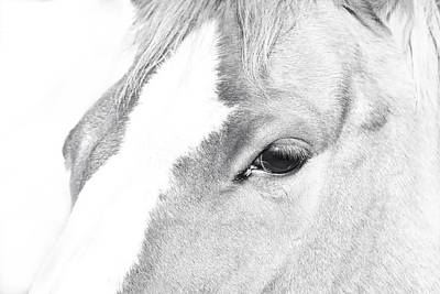 Horse Eye Black And White Poster