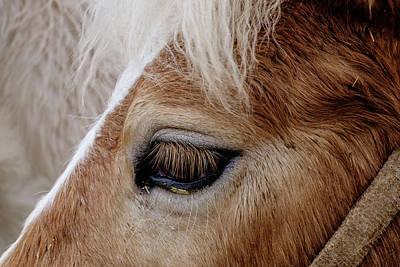 Horse Eye Poster by Okan YILMAZ