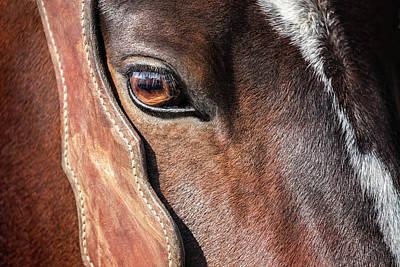 Horse Eye Poster by Todd Klassy