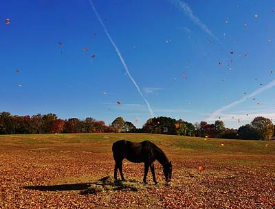 Horse Farm In The Fall Poster by Ed Sweeney
