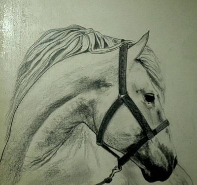 Horse Head-2 Poster by Rana