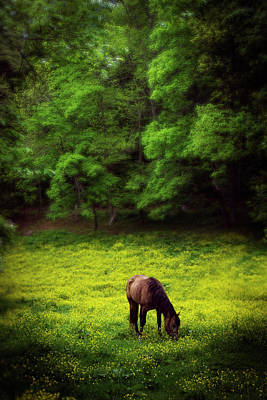 Horse In Flowers Poster