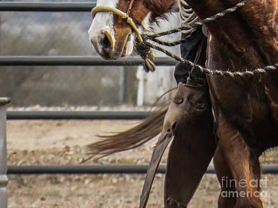 Horse In Hackamore Poster