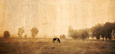 Horse In Pasture 1 Poster by Vivian Frerichs
