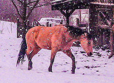 Horse In Snow Poster