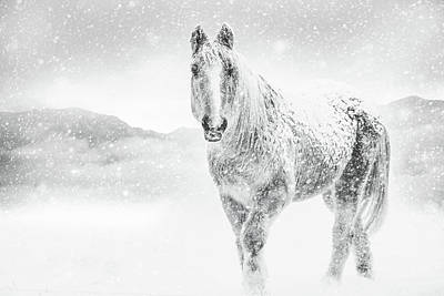 Horse In Winter Snow Storm Poster