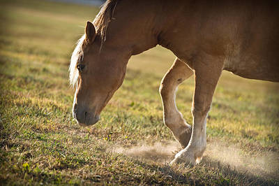 Horse Pawing In Pasture Poster by Steve Gadomski