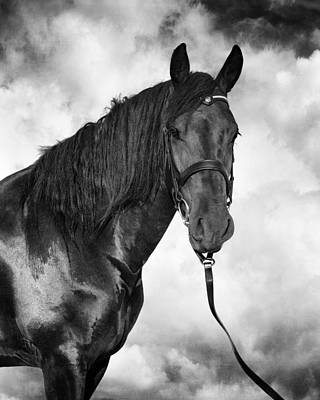 Horse Portrait 3 Poster by Wolf Shadow  Photography