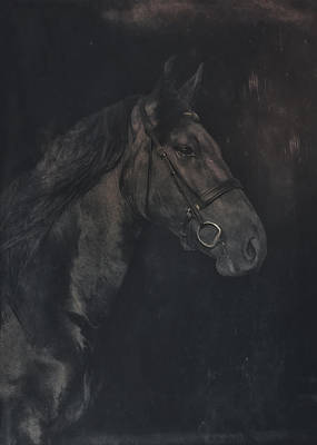 Horse Portrait 4 Poster by Wolf Shadow  Photography