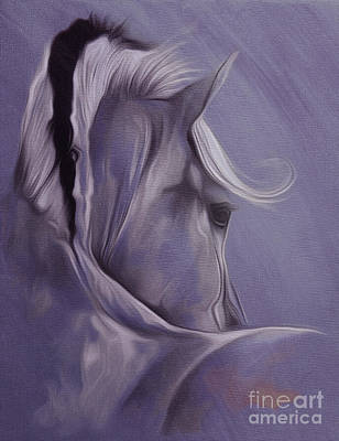 Horse Portrait From Backside  Poster by Gull G