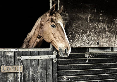 Poster featuring the photograph Horse Profile In The Stable by Marion McCristall