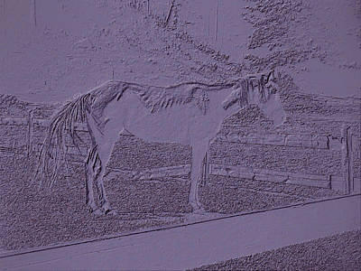 Horse Standing By The Fence 2 Poster