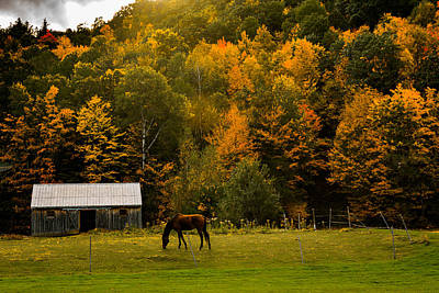 Horse Under Golden  Fall Foliage Poster by Jeff Folger