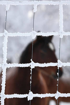 Horse Viewed Through Frost Covered Fence Poster