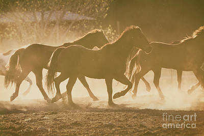 Poster featuring the photograph Horses And Dust by Ana V Ramirez