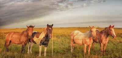 Horses At Kalae Poster