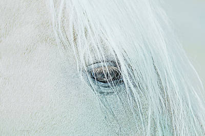 Horse's Eye Portrait Poster by Jennie Marie Schell