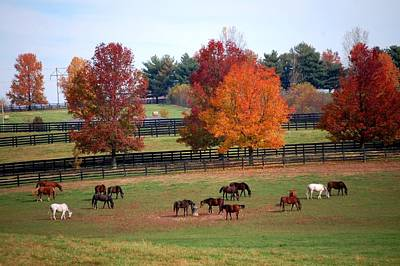 Horses Grazing In The Fall Poster