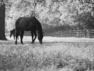Horses In A Field Of Flowers Poster by Rachel Morrison