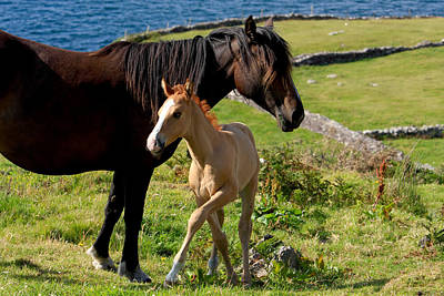 Horses In Landscape Poster by Aidan Moran