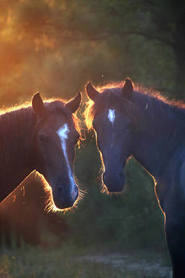 Horses In The Early Morning Poster