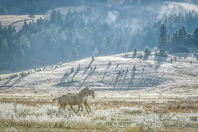 Horses In The Frost Poster