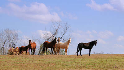 Poster featuring the photograph Horses On The Hill by Bonnie Willis