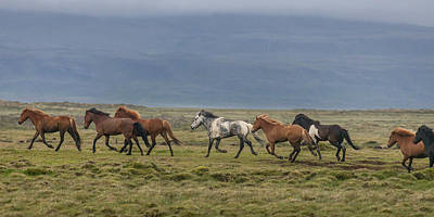 Horses Running In The Countryside Poster
