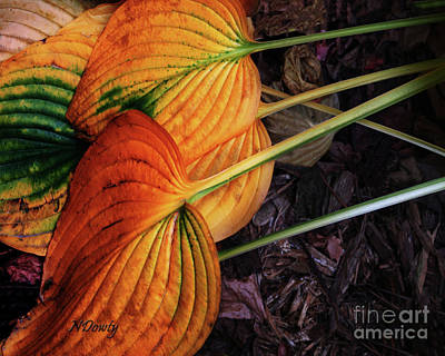 Hostas In Autumn Poster