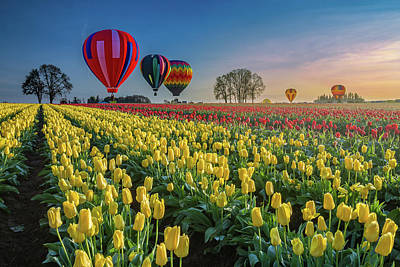 Hot Air Balloons Over Tulip Fields Poster